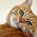 猫の元気がないのは原因不明が多い!病院へ行く前に試したいセルフチェック