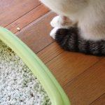 猫のオシッコの臭いの取り方!クエン酸水が効果的って本当?