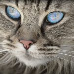 猫の涙が茶色に!色から考えられる原因&対処法を紹介