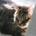 猫が20歳以上生きるって本当?長寿猫になるためのポイントも紹介