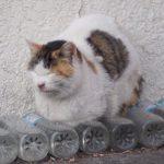 猫除けにペットボトルの水は効果がない?理由と噂が広まった原因