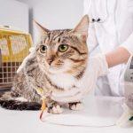 猫の背中のできものは癌?考えられる3つの病気と治療法を紹介