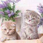 猫にラベンダーのアロマは危険!匂いだけでも死に至るので要注意
