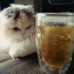 ビール酵母は猫の腎不全に効果あり?与え方や副作用を解説