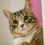 フローリングに猫の尿シミが!綺麗に取る方法ってある?