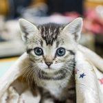 猫の食欲不振対策!実際に効果があった5つの対処法を紹介