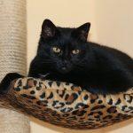猫の行動範囲は意外と狭い!室内飼いでも大丈夫?
