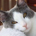高齢猫の食欲不振!強制給餌の食べさせ方について解説
