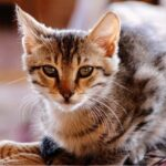 猫の皮膚病には薬用シャンプー!市販のでも効果はあるの?