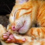 猫の食欲不振に点滴の効果はある?病院へ行くべきタイミングを紹介