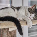猫の食欲不振は夏が原因!季節によるものだから様子見でいいの?