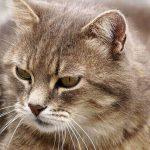 猫が食欲不振になるのはストレスが原因?考えられる3つの理由を紹介