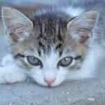 猫が食欲不振で下痢!寄生虫感染の可能性があるって本当?