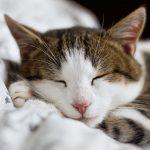 猫をリラックスさせる方法!気持ちよくさせる5つのポイントを紹介