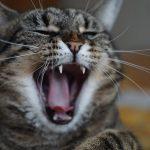 猫vs蛇はどっちが勝つの?噛まれた時や食べてしまった場合の対処法