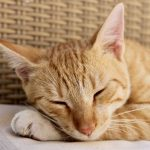 猫が元気がないのは病気だから?考えられる5つの病気を解説