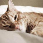 猫の冬の適温は?寒さに弱い猫が温かく過ごすための3つのコツを紹介