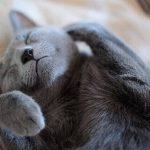 猫の食欲不振にはまたたび!与えすぎによるリスクも解説