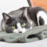 猫が避妊手術後元気がないのは抗生物質のせい?自己判断で辞めてもいいの?