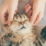 猫のツボ押しは効果あり?コツと3つの注意点について解説