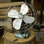 猫に扇風機は危ない?安全に涼んでもらうための3つの対策を紹介