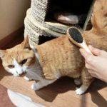 洗濯機に猫の毛が溜まる!効果的な対策や便利グッズを紹介